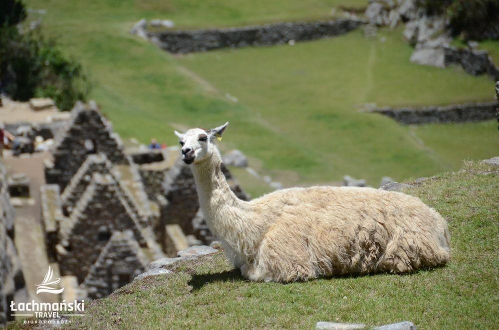 peru 29 - Peru - fotorelacja Bogusława Łachmańskiego