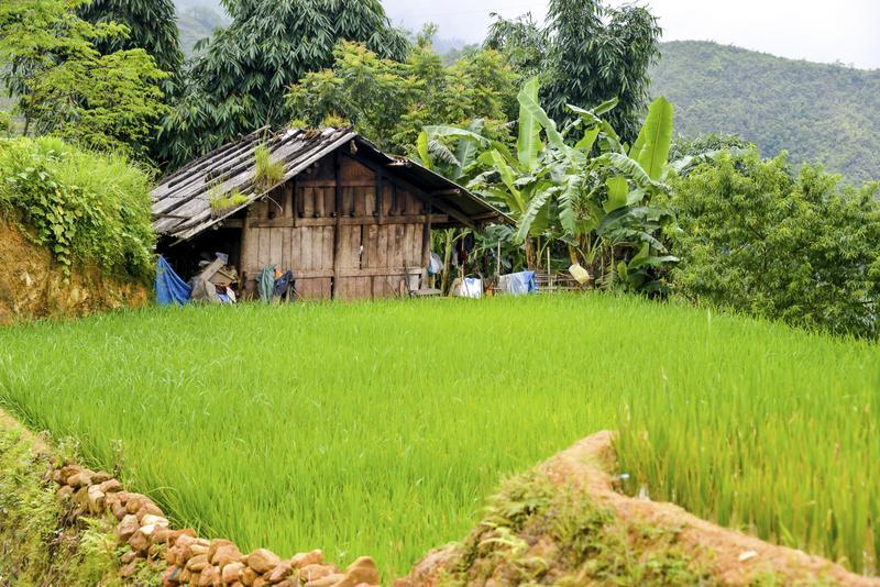 stock photo 45388470 rice field in sa pa 2 - WIETNAM: wyprawa szlakiem smaków orientu