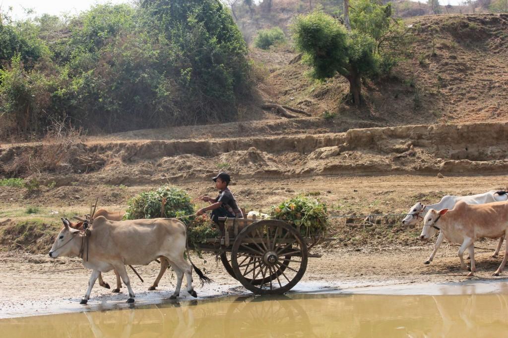 IMG 5212 1024x683 - BIRMA: wyprawa na Festiwal w pagodzie Phaung Daw Oo