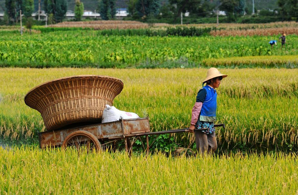 YUNNAN 3 - CHINY POŁUDNIOWE: Syczuan – Yunnan: wyprawa na Festiwal Pochodni