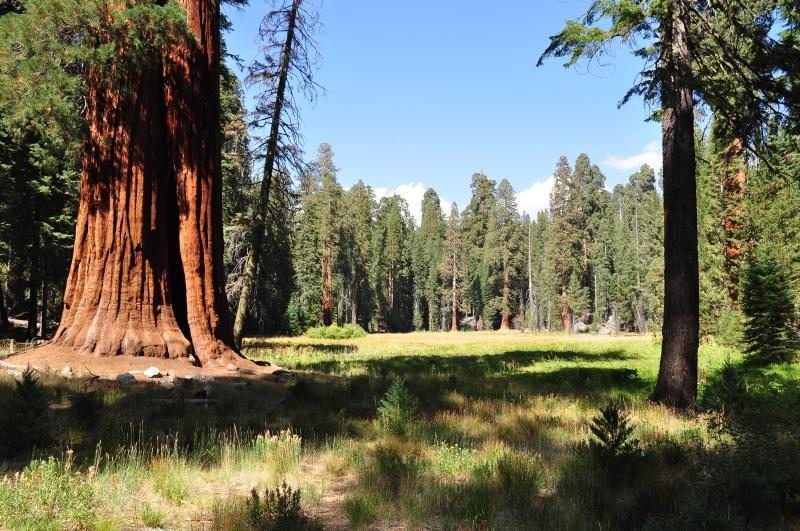 DSC 0215 - USA: Parki Narodowe Zachodnich Stanów
