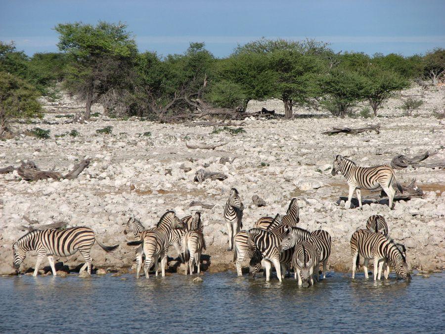 49 - NAMIBIA: wyprawa do krainy kontrastów i niepowtarzalnych krajobrazów