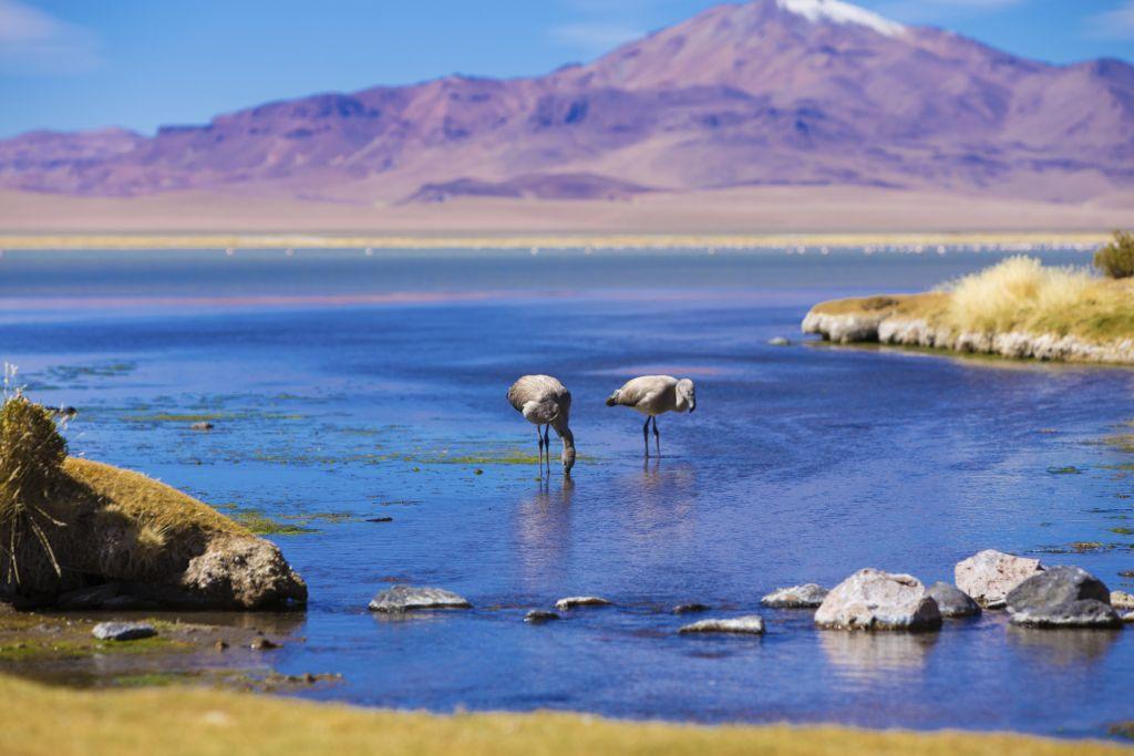 stock photo 25737029 atacama salar in chile with flamingo 1024x683 - BOLIWIA – CHILE: wyprawa przez Amazonię i Andy