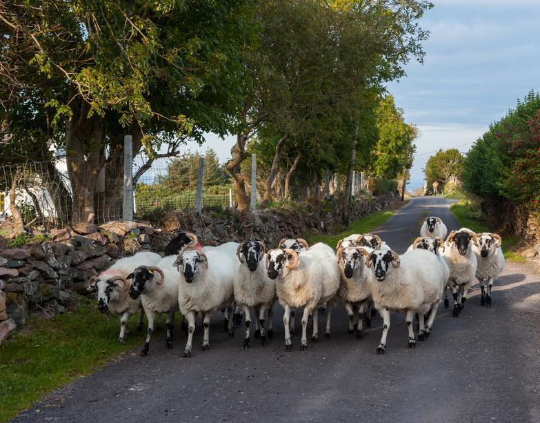 Fotolia 102263163 S - IRLANDIA & Irlandia Północna