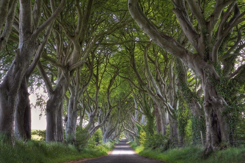 Fotolia 53315276 S - IRLANDIA & Irlandia Północna