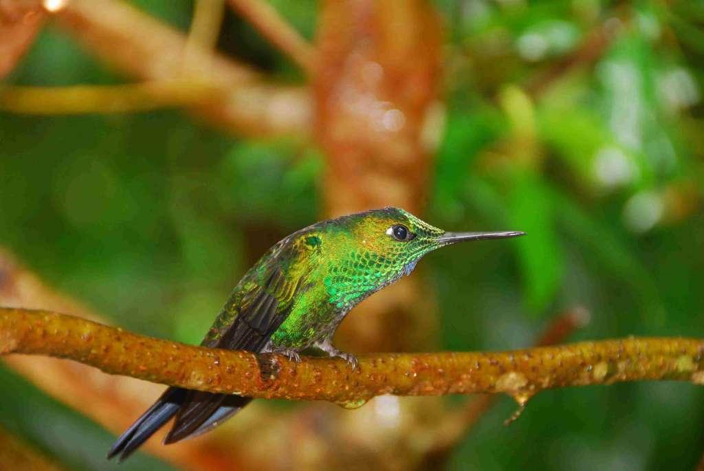Kolibry w Monte Verdre Kostaryka 1024x685 - KOSTARYKA, NIKARAGUA I PANAMA  – SZLAKIEM KOLORÓW NATURY