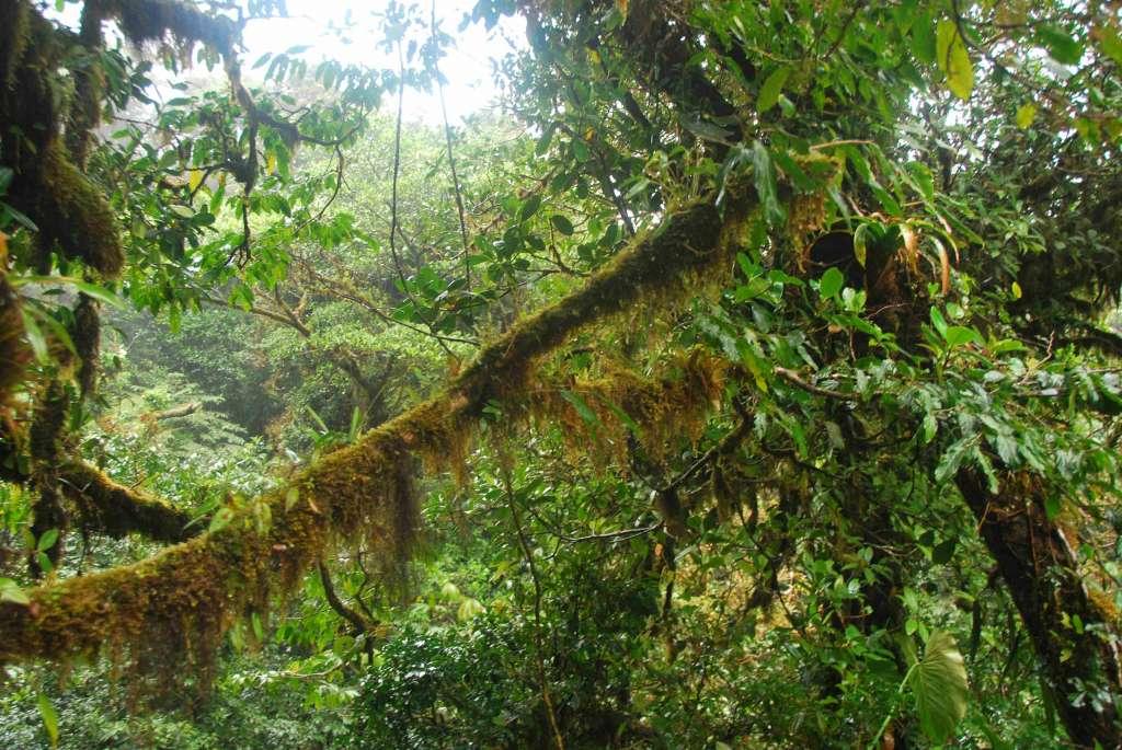 las chmórny Monte verdr Kostaryka 1024x685 - KOSTARYKA, NIKARAGUA I PANAMA  – SZLAKIEM KOLORÓW NATURY