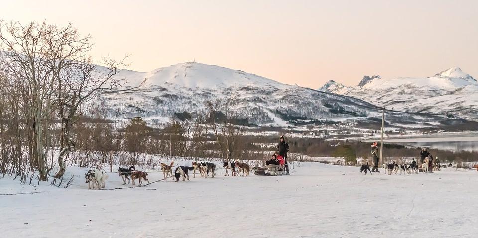 dog sledding 2068876 960 720 - NORWEGIA: rejs statkiem do Kirkenes i sylwester w lodowym hotelu