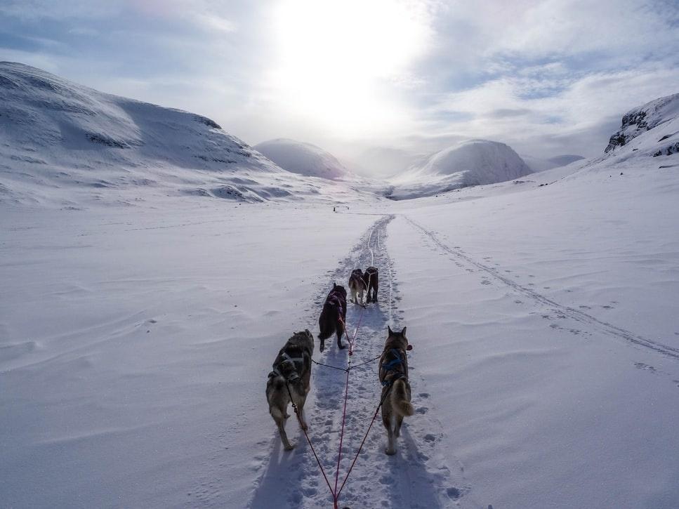 photo 1477383384651 442903132e79 - NORWEGIA: rejs statkiem do Kirkenes i sylwester w lodowym hotelu