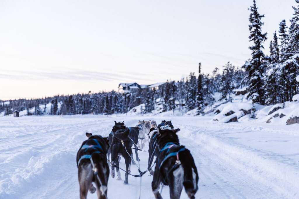 photo 1515467135277 8e8dcd900d44 1024x683 - NORWEGIA: rejs statkiem do Kirkenes i sylwester w lodowym hotelu