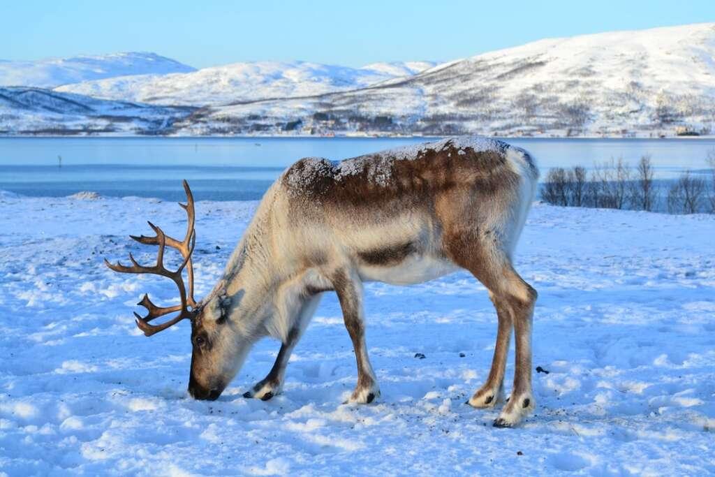 photo 1537882000185 26451d6c4363 1024x683 - NORWEGIA: rejs statkiem do Kirkenes i sylwester w lodowym hotelu