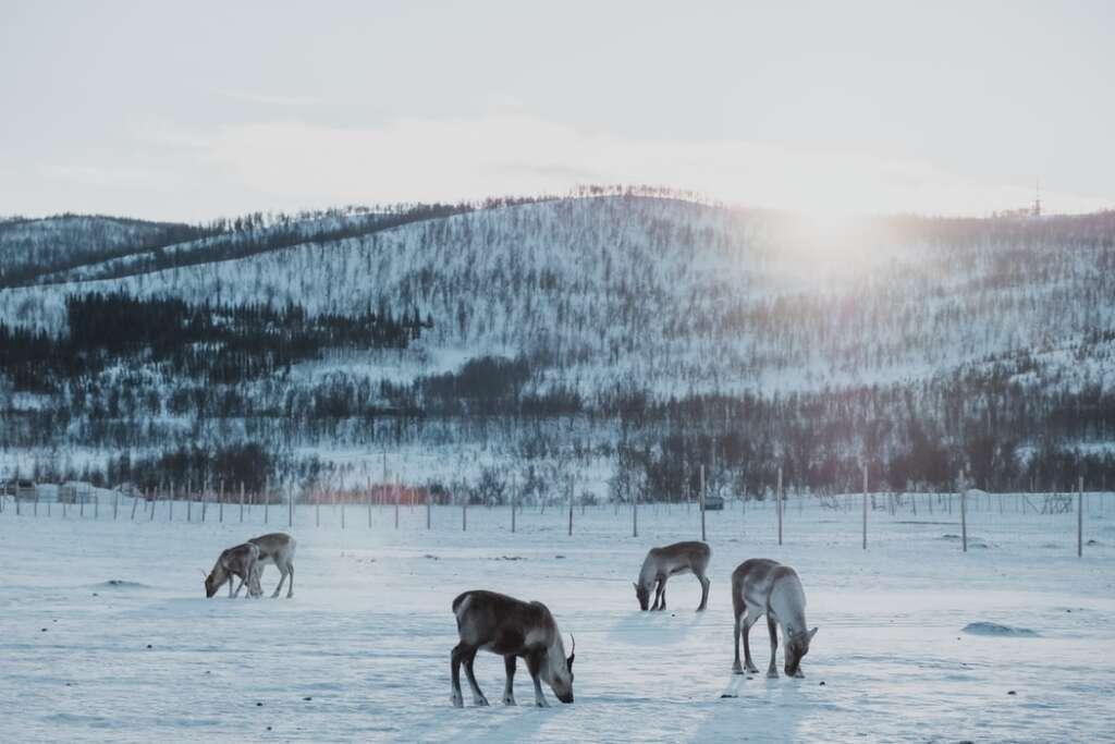 photo 1560148731 a8dbda7ad8da 1024x683 - NORWEGIA: rejs statkiem do Kirkenes i sylwester w lodowym hotelu