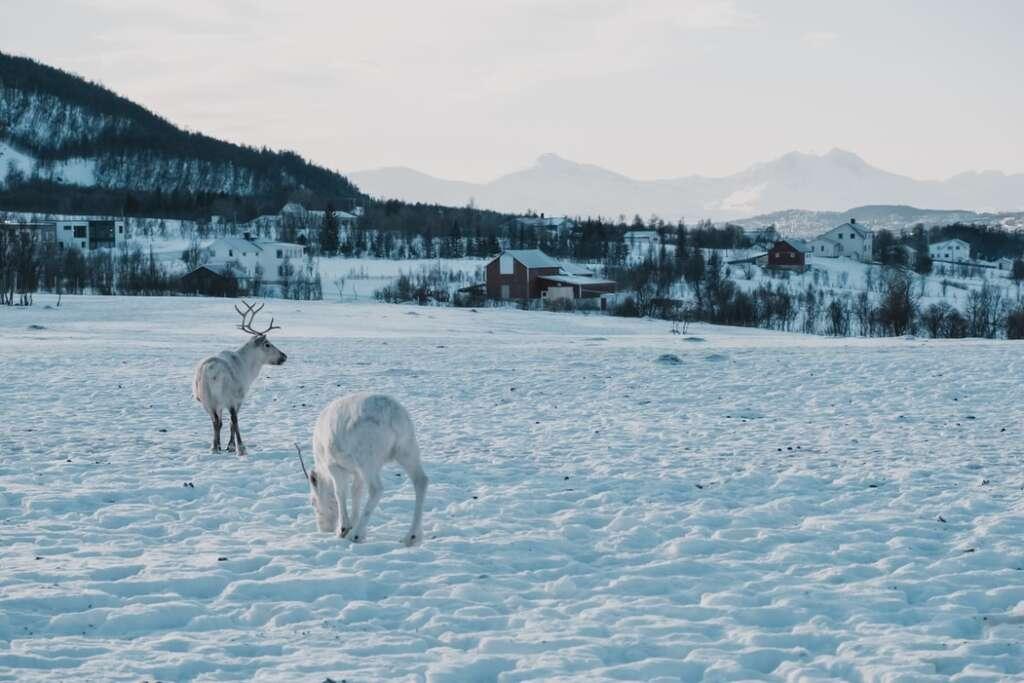 photo 1560148735 ebe76aca0ee2 1024x683 - NORWEGIA: rejs statkiem do Kirkenes i sylwester w lodowym hotelu