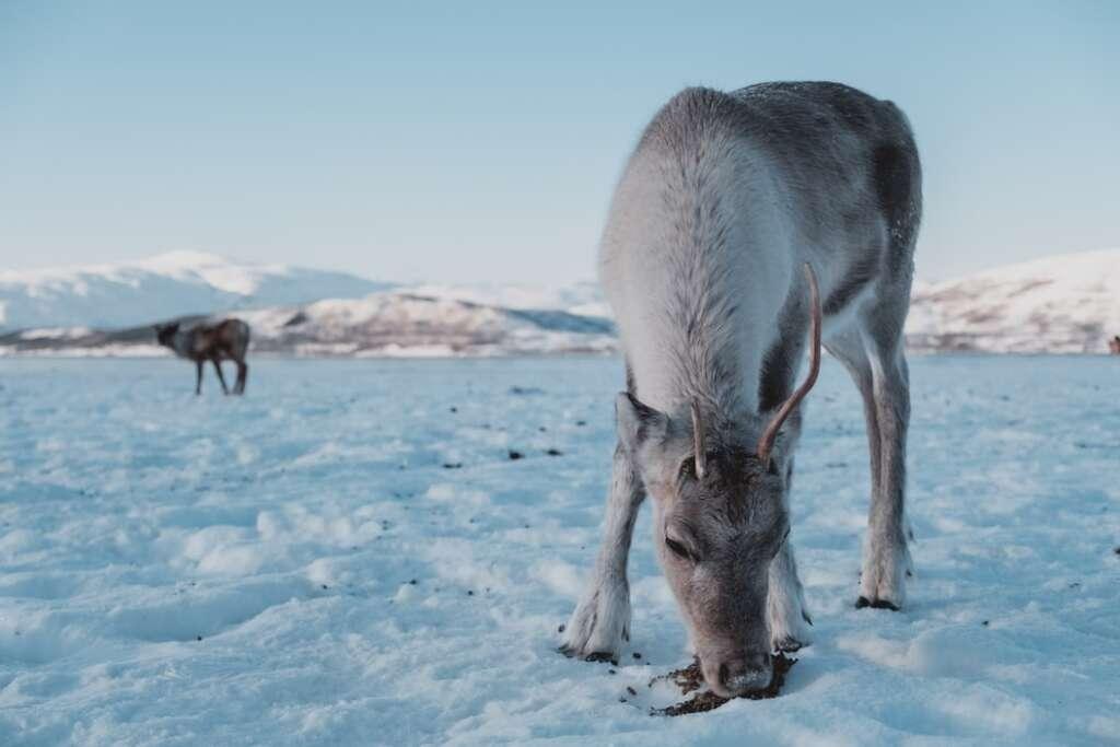photo 1560148740 d4e8e1c68580 1024x683 - NORWEGIA: rejs statkiem do Kirkenes i sylwester w lodowym hotelu