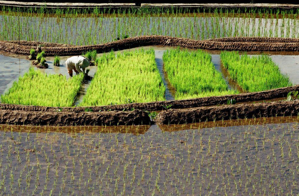 00020006B - FILIPINY: Bohol, Cebu, El Nido, Palawan, Manila i tarasy ryżowe Bangaan - wycieczka