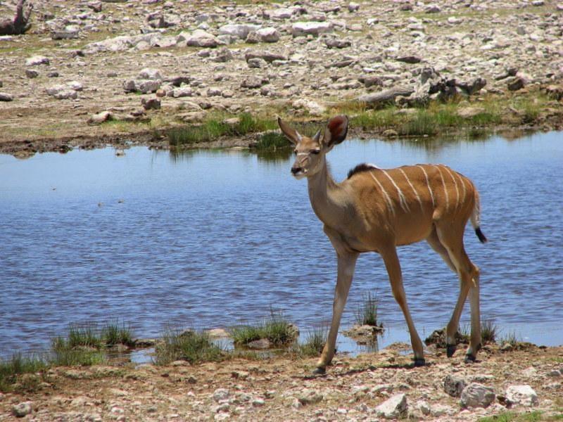 15. 1 - NAMIBIA: wyprawa do krainy kontrastów i niepowtarzalnych krajobrazów