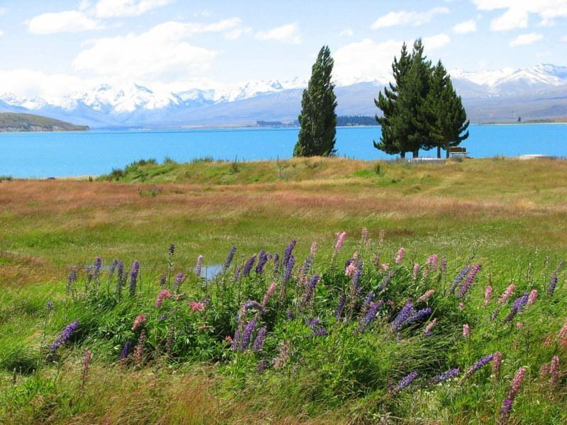 20. Jezioro Tekapo 1 - NOWA ZELANDIA – wyprawa na drugi koniec świata po przestrzeń i niekończąca się wolność + opcja FIDŻI i TONGA