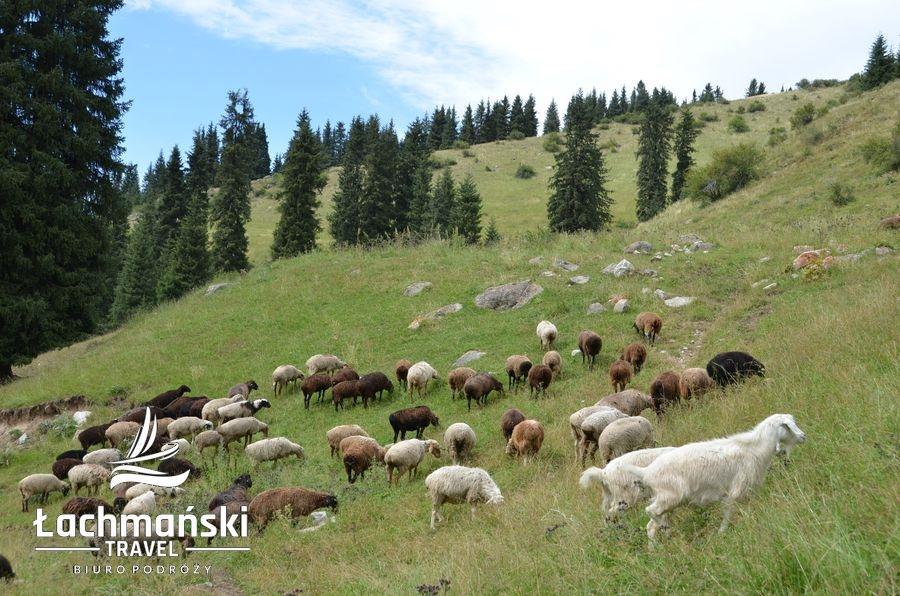 36 wm - Kirgistan - fotorelacja Bogusława Łachmańskiego