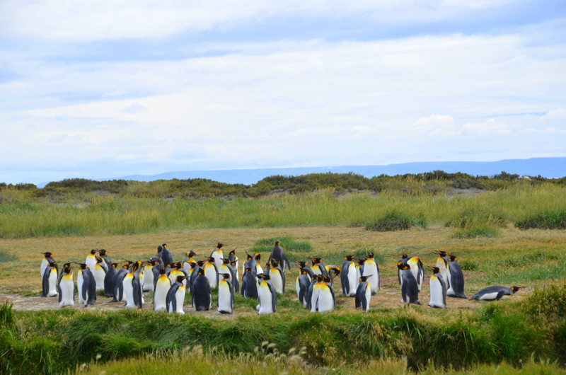 6.Ten gatunek żyje tylko w tym miejscu oraz na Falklandach i na Antarktydzie - CHILE – Północ i Południe – wyprawa na Uyuni