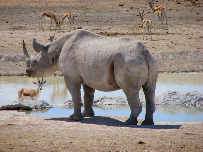 7. - NAMIBIA: wyprawa do krainy kontrastów i niepowtarzalnych krajobrazów