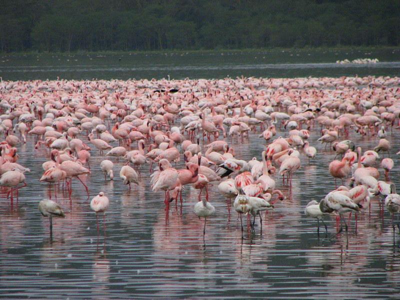 Kenia Zanzibar 2007 2008 cz.1 251 - KENIA: wyprawa nad Jezioro Turkana: Nefrytowe Morze Afryki