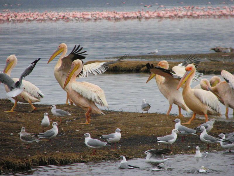 Kenia Zanzibar 2007 2008 cz.1 257 - KENIA: wyprawa nad Jezioro Turkana: Nefrytowe Morze Afryki
