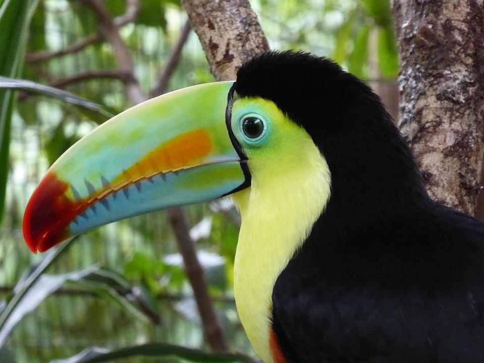 ZIELONE 1 - PANAMA – KOLUMBIA: wyprawa na Archipelag San Blas