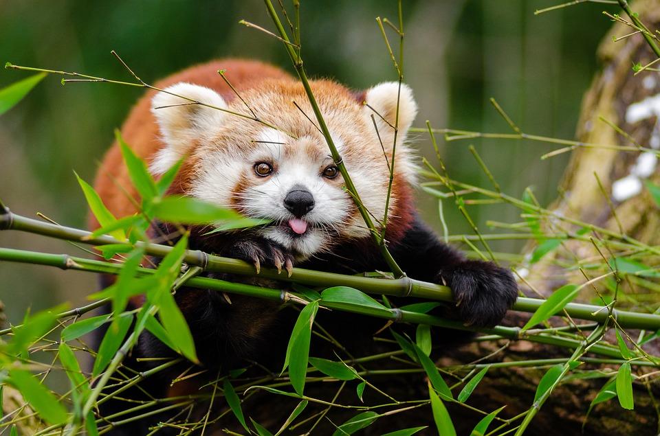 adorable 1851650 960 720 - INDIE: Sikkim i Bengal Zachodni - wyprawa