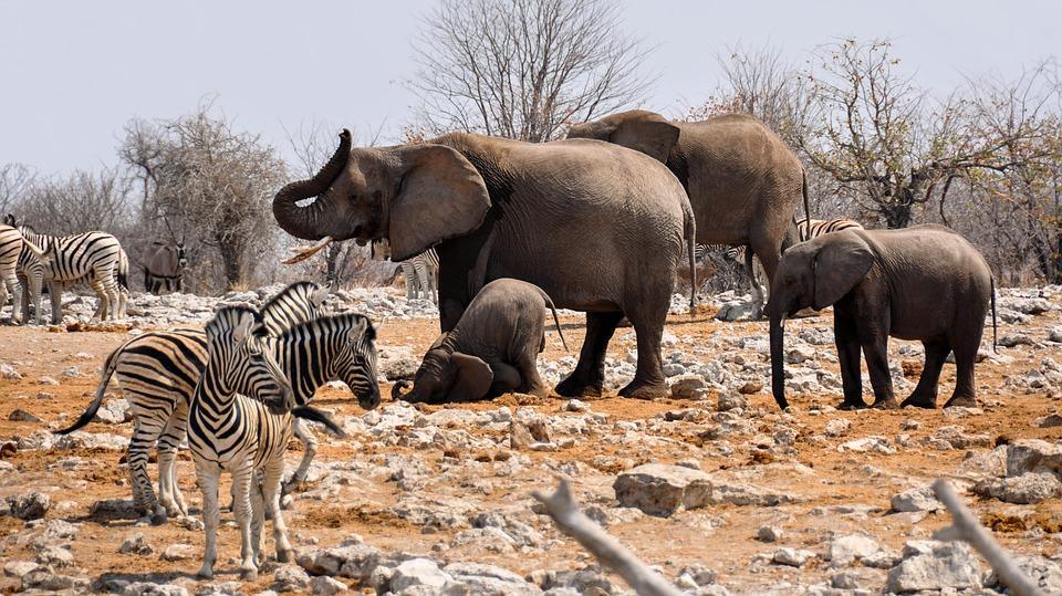 africa 1170112 960 720 - NAMIBIA – BOTSWANA – ZIMBABWE – wyprawa do wodospadów Wiktorii