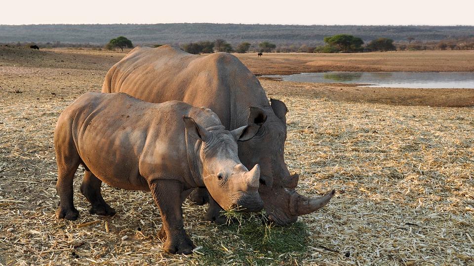 africa 1170131 960 720 - NAMIBIA – BOTSWANA – ZIMBABWE – wyprawa do wodospadów Wiktorii