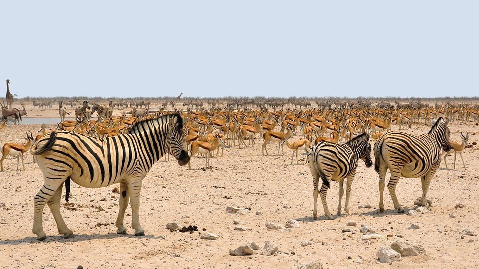 africa 1170176 960 720 - NAMIBIA – BOTSWANA – ZIMBABWE – wyprawa do wodospadów Wiktorii