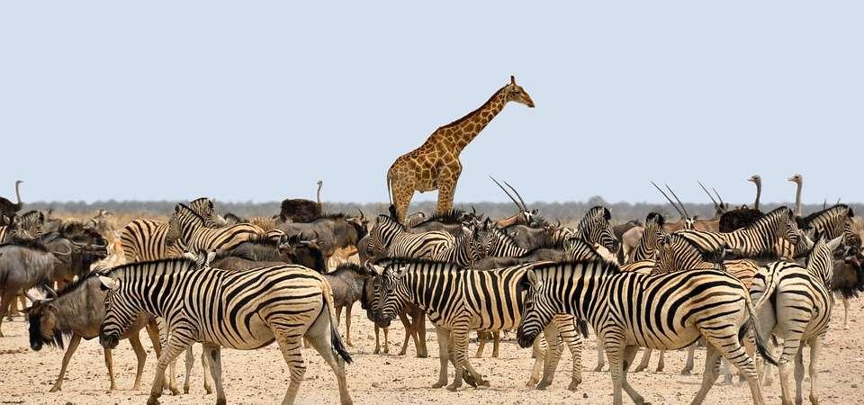 NAMIBIA: wyprawa do krainy kontrastów i niepowtarzalnych krajobrazów