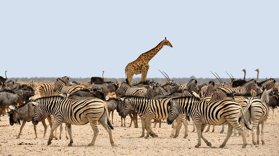 africa 1170177 960 720 - NAMIBIA – BOTSWANA – ZIMBABWE – wyprawa do wodospadów Wiktorii