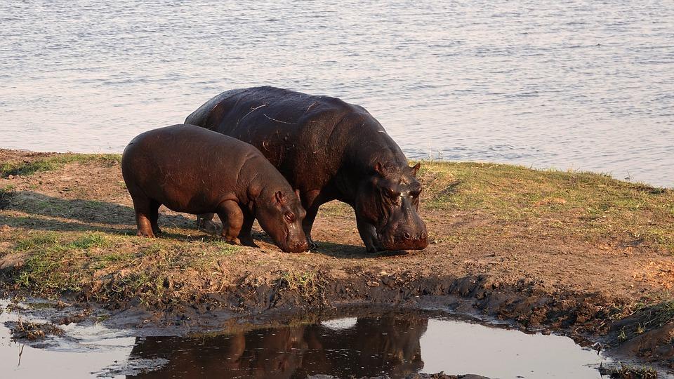 africa 1759369 960 720 - NAMIBIA – BOTSWANA – ZIMBABWE – wyprawa do wodospadów Wiktorii
