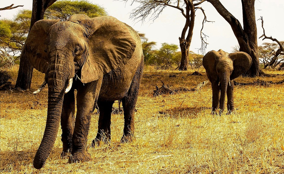 africa 2629969 960 720 - TANZANIA I ZANZIBAR