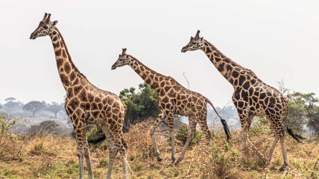 andrew sit wlix adjMn8 unsplash 1024x576 - UGANDA – Perła Afryki