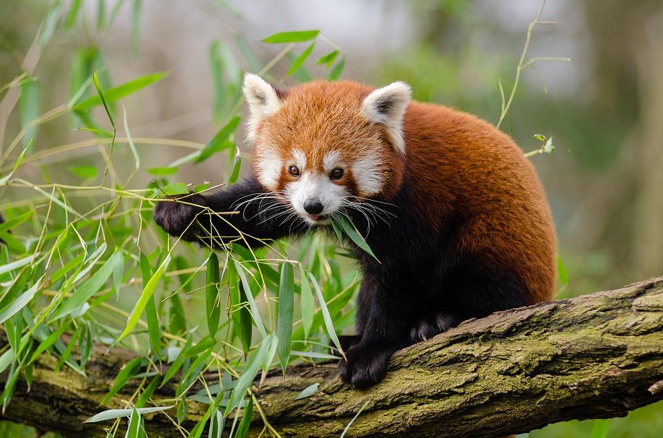 animal 1852789 960 720 - INDIE: Sikkim i Bengal Zachodni - wyprawa
