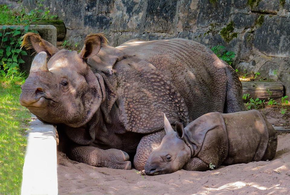 animal 2530978 960 720 - INDIE: Sikkim i Bengal Zachodni - wyprawa