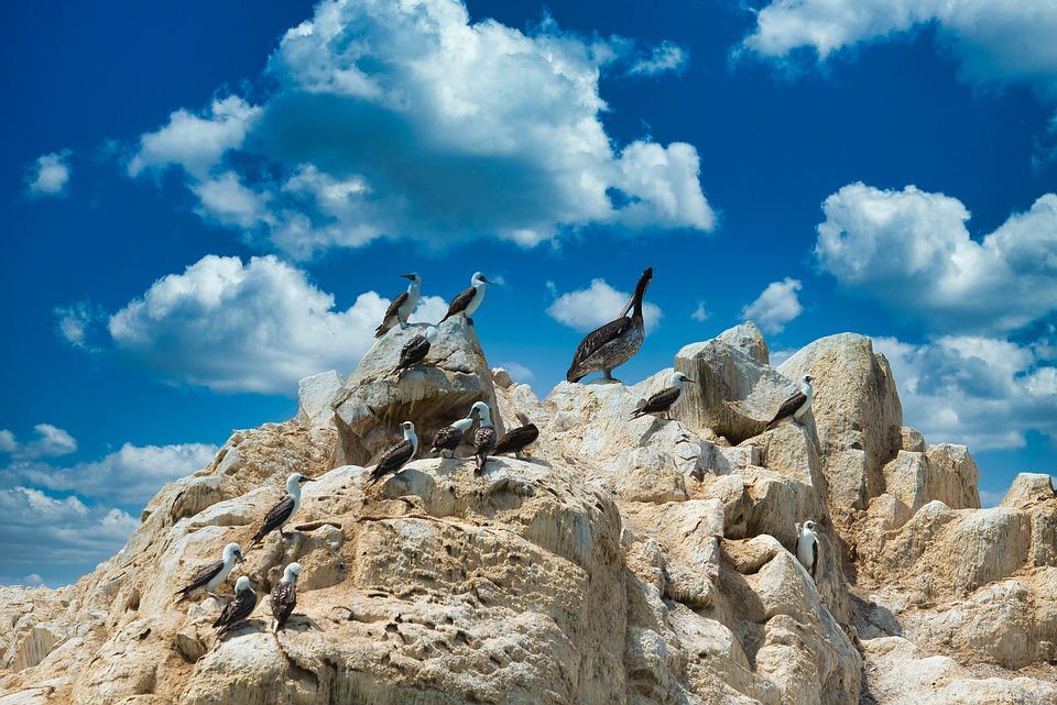 ballestas islands 5059221 960 720 - PERU – Wyżej niż kondory...