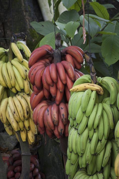 banana 770347 960 720 - 8 KRAJÓW AMERYKI ŚRODKOWEJ