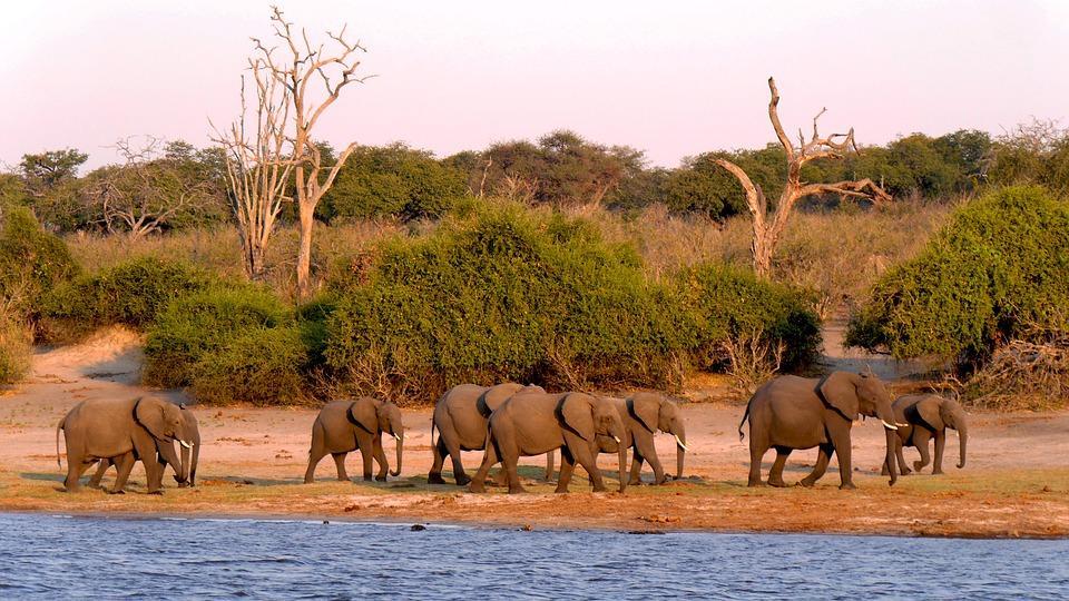 botswana 1653100 960 720 - NAMIBIA – BOTSWANA – ZIMBABWE – wyprawa do wodospadów Wiktorii
