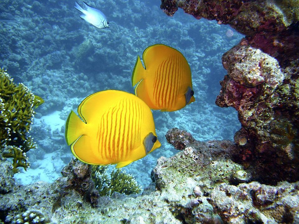 diving 1656380 960 720 - AUSTRALIA, NOWA ZELANDIA, FIDŻI i TONGA - Wielka Wyprawa Marzeń