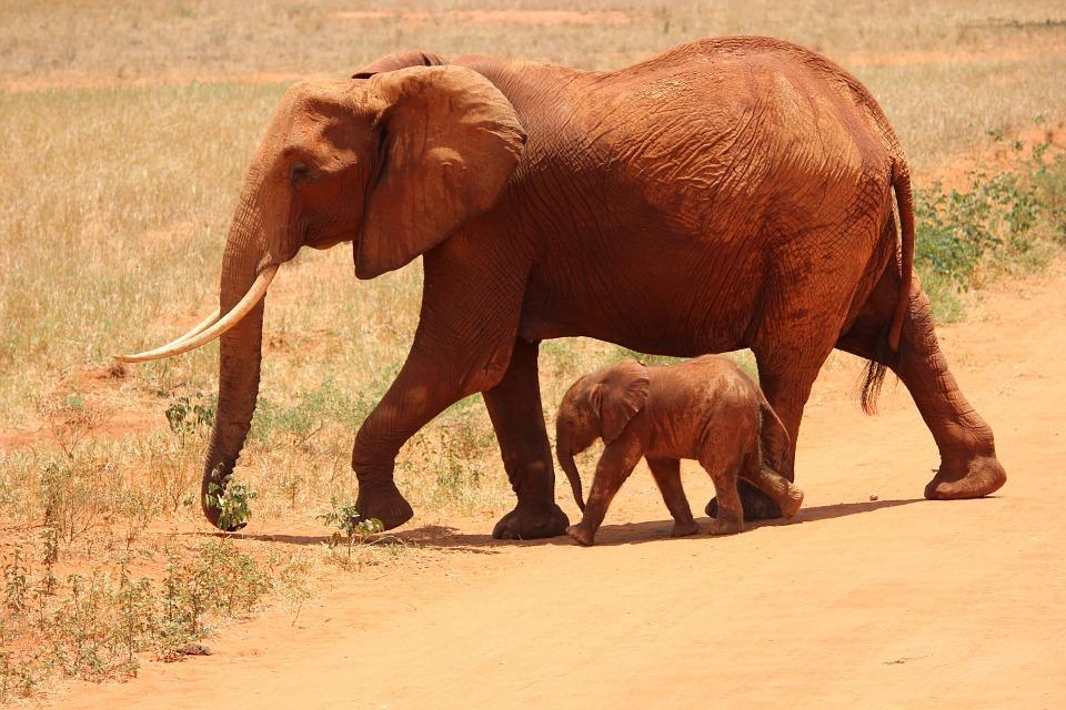 elephant 175798 960 720 - KENIA: wyprawa nad Jezioro Turkana: Nefrytowe Morze Afryki