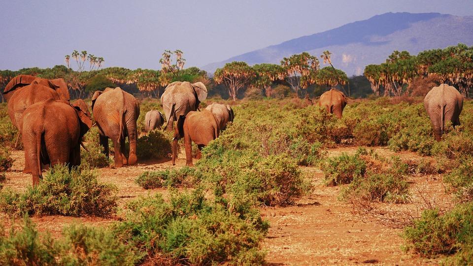 elephant 2668675 960 720 - KENIA: wyprawa nad Jezioro Turkana: Nefrytowe Morze Afryki