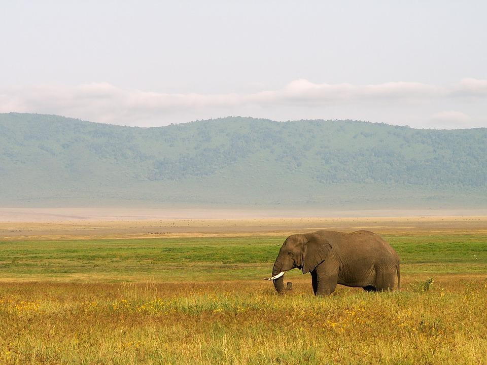 elephant 2683007 960 720 - TANZANIA I ZANZIBAR