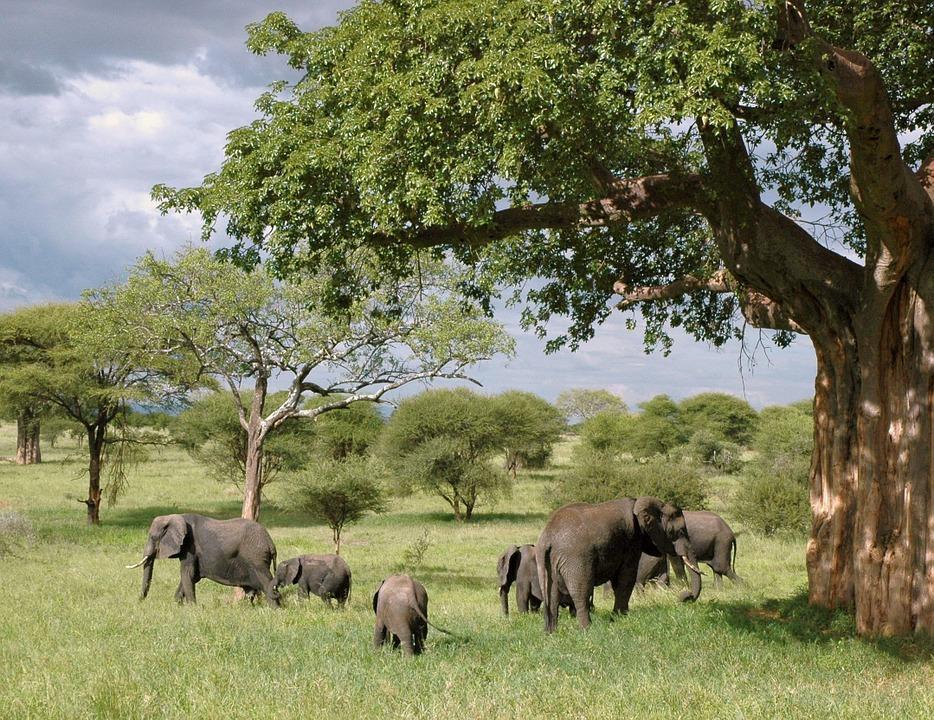 elephant 289134 960 720 - TANZANIA I ZANZIBAR