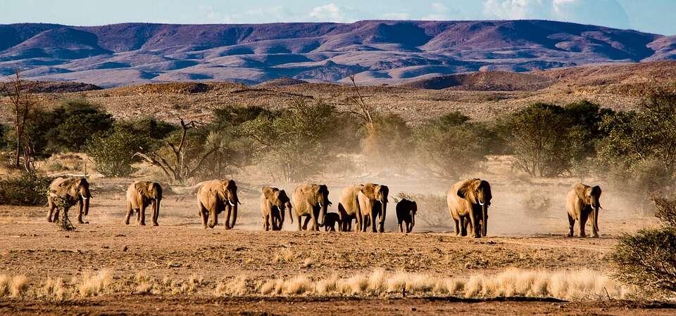 KENIA: Wielka migracja zwierząt przez rzekę Mara - wyprawa