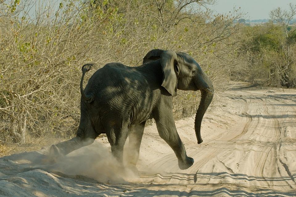 elephant 673070 960 720 - NAMIBIA – BOTSWANA – ZIMBABWE – wyprawa do wodospadów Wiktorii