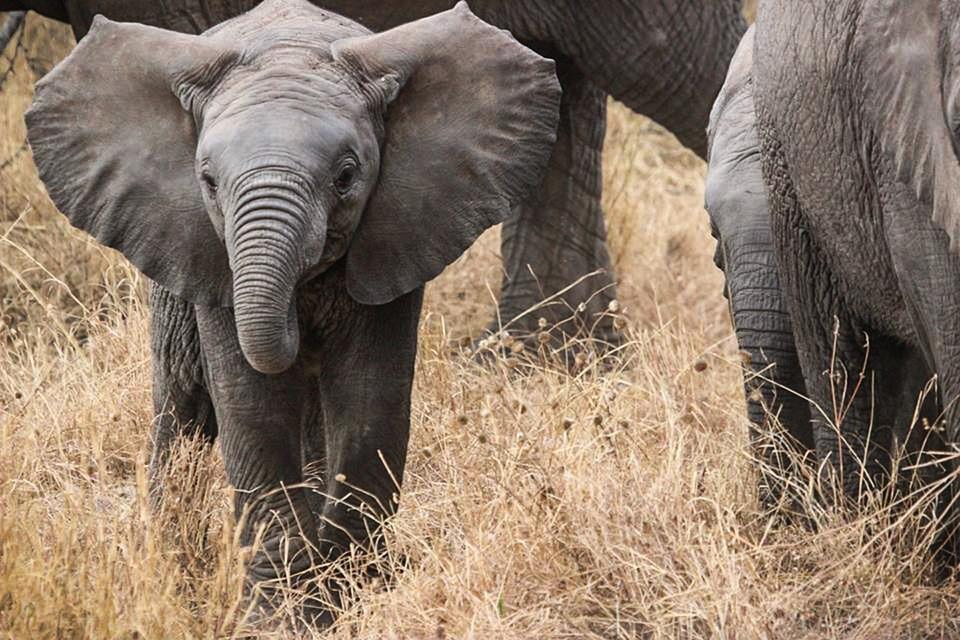elephant baby 285515 960 720 - TANZANIA I ZANZIBAR
