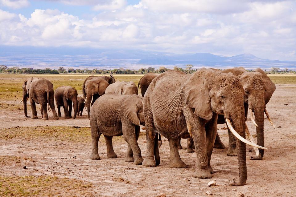 elephants 458990 960 720 - KENIA: wyprawa nad Jezioro Turkana: Nefrytowe Morze Afryki